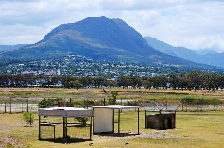 Cheetah Outreach at Paardevlei, between Somerset West and Strand - in the Helderberg basin. Cheetah Outreach is an education and community-based program created to raise awareness of the plight of the cheetah and to campaign for its survival.  Founder Annie Beckhelling launched the project in January 1997. It aim to promote the survival of the free ranging, Southern African cheetah through environmental education and delivering conservation initiatives.  Phone: 021 851 6850  #cheetahoutreach