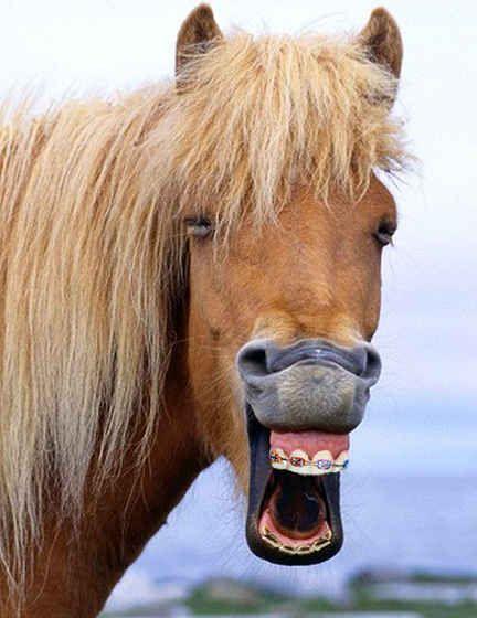 175 best Orthodontics aka :D orthodontia images on Pinterest