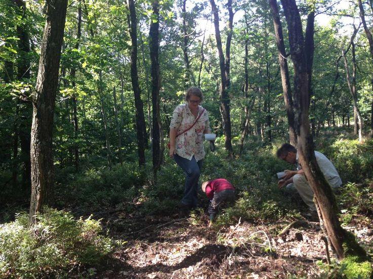 Bosbessen plukken in augustus: tips en waar kan je de pluklocaties vinden?