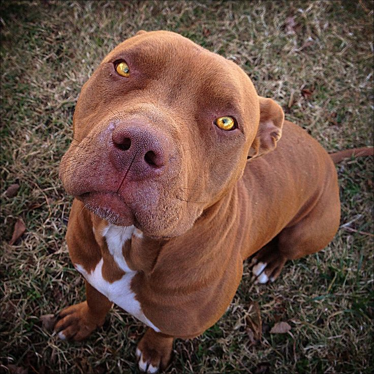 This is what my meatball is going to look like when he's a big boy.