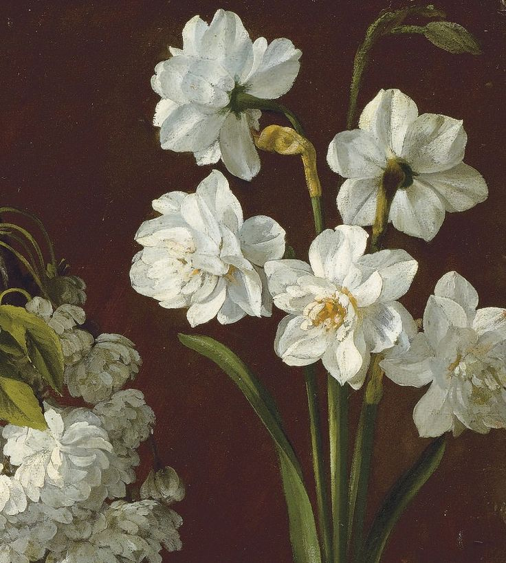 """""""Purple tulips, white flowering prunus, narcissus and pink chrysanthemum"""" 19th Century (detail)  Pancrace Bessa (1772 – after 1836) French natural history artist. Oil on paper Private collection"""