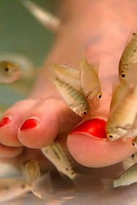 Fish Pedicure… Some Facts! I have done this and it is wonderful