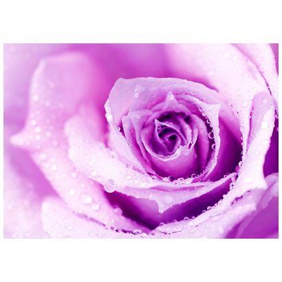 Rose #postcards