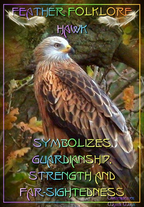 Feather Folklore... Hawk - Symbolizes Guardianship, Strength and Far-    Sightedness...