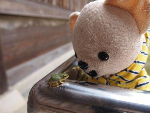 カエルさん、はじめまして!