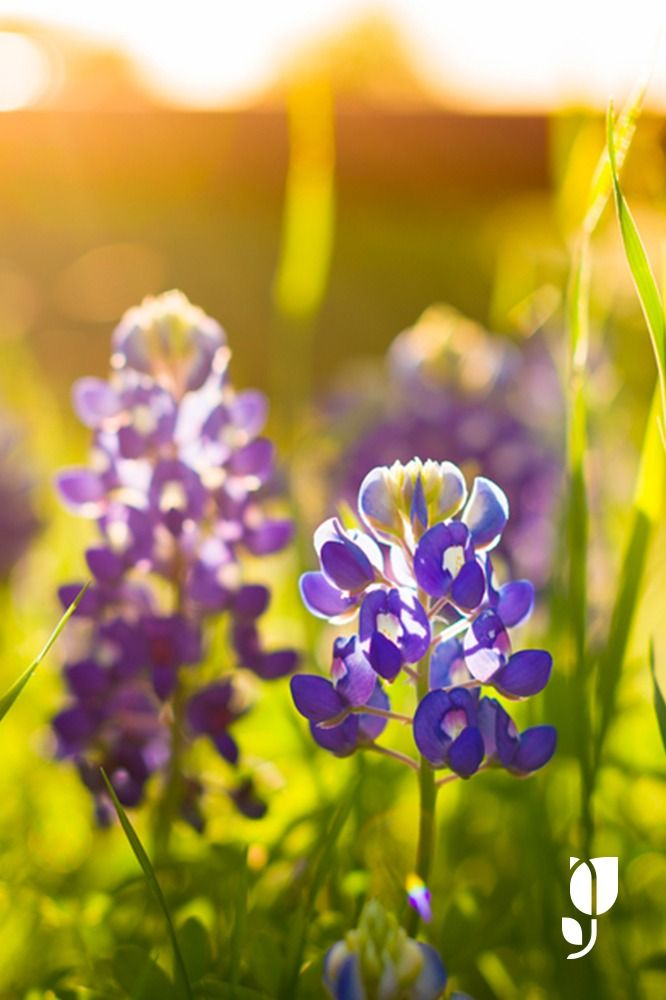 5 amazing gardens any nature lover or aspiring botanist needs to visit.