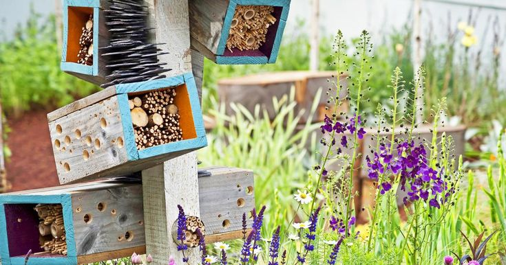 Die heutige Agrarlandschaft bietet vielen Insektenarten kaum noch Lebensräume. Umso wichtiger, im eigenen Garten etwas für den Schutz der Insektenwelt tun – zum Beispiel mit einem Insektenhotel. Durch weniger Schädlingsprobleme und reichere Ernten zahlt sich das Engagement auch für den Hobbygärtner aus.