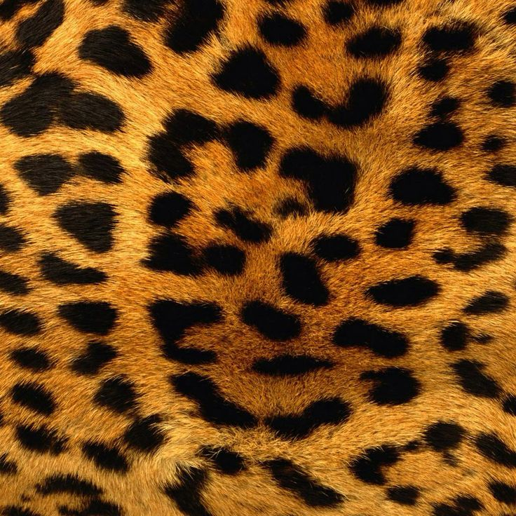 gallery for wild animal print wallpaper