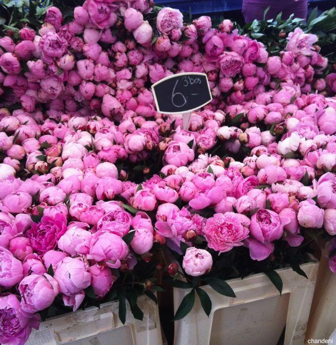 pretty pretty pink flowers