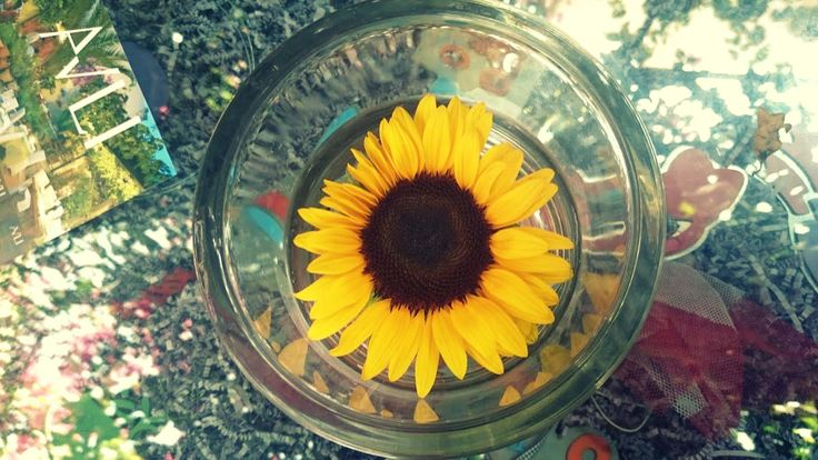 "Helianthus or sunflowers (from the Greek: ήλιος, Hēlios, ""sun"" and ανθός, anthos, ""flower"")"