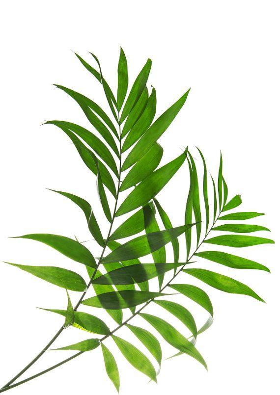 a8c8d7362e86 Tropical Leaf Print