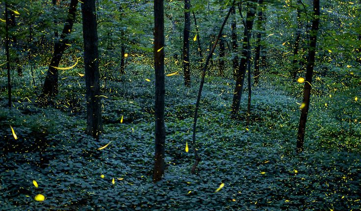 Santuario de luciérnagas de Tlaxcala, atractivo para turismo mundial