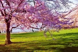 Resultado de imagem para flores mais lindas do mundo tumblr