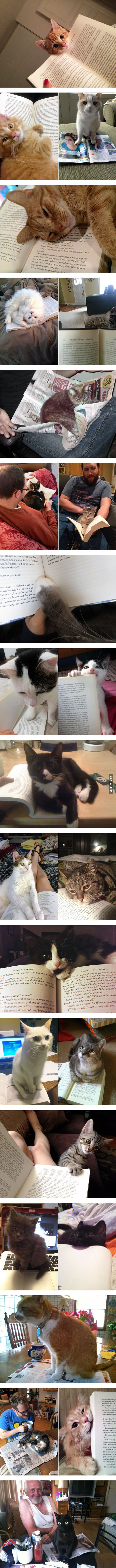 25 Cats That Have No Intention of Letting You Read                                                                                                                                                                                 More                                                                                                                                                                                 More