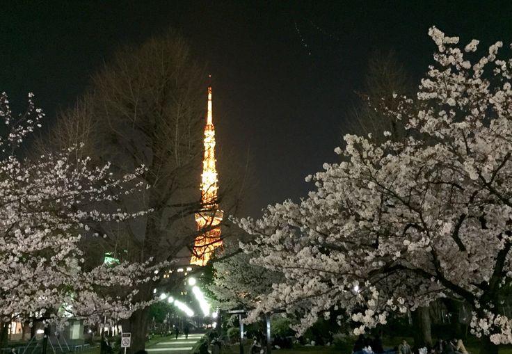 夜桜のエスコート。東京タワー。