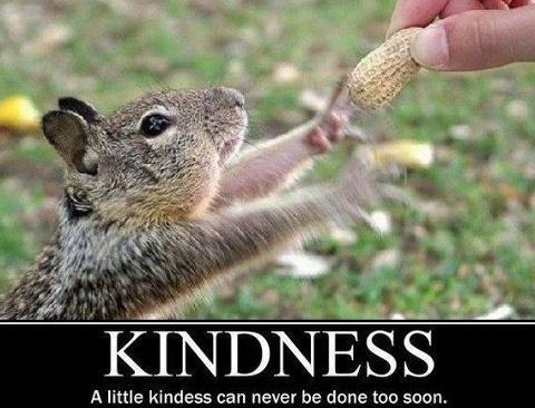 Image result for Kindness Funny