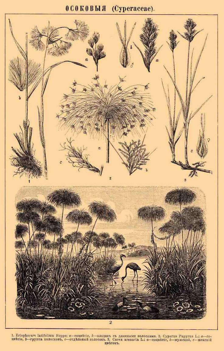 best botanical images on pinterest botanical drawings