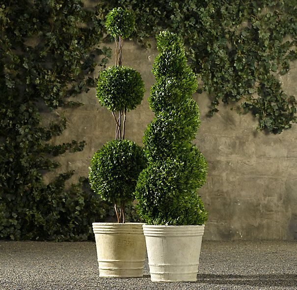 Front Door Topiary: Preserved Boxwood Topiary
