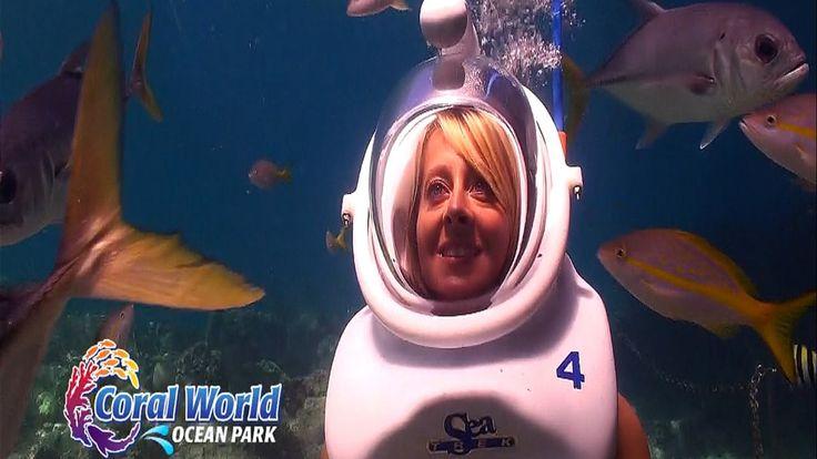 Sea Trek Helmet Dive at Coral World