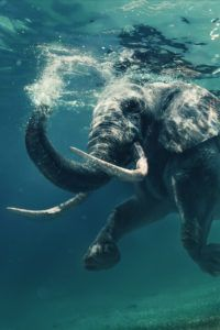 Hovorí sa, že Maldivy sú raj na zemi. Nie je to však úplná pravda. Na svete existuje miesto, kam ročne zavíta naozaj len pár turistov, a kde sa môžete okúpať so slonmi na otvorenom mori. Slonia sprcha je na Srí Lanke tradícia, na Andamanských ostrovoch ale slony stretnete na otvorenom mori – vy sa potápate, …