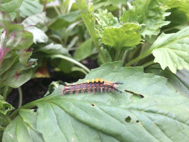 Our little pet centipede ;)