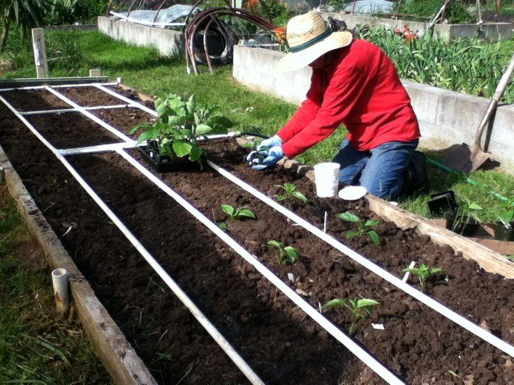 93 Best Drip Irrigation Images On Pinterest Potager