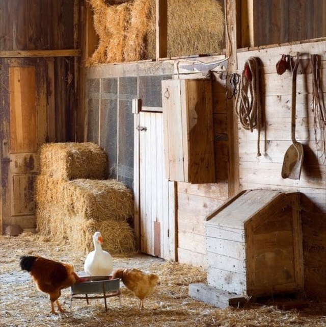 Inside the barn......the way I remember my Grandpa's barn except he didn't have any geese; just chickens and horses.