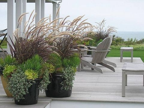 Tall Potted Plants top 25+ best tall plants ideas on pinterest | lemongrass mosquito
