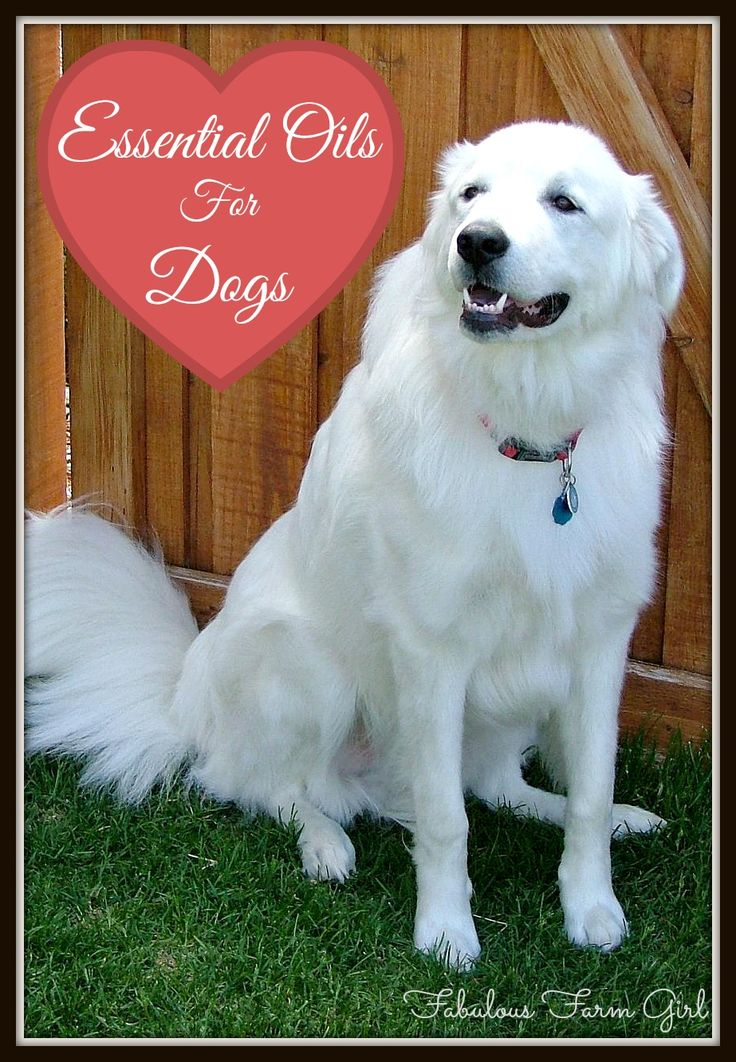 24 Best Doterra And My Dogs Images On Pinterest