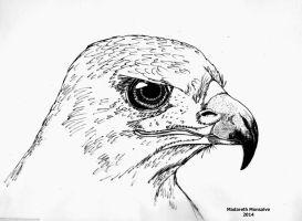 Aguila Chilena by Madareth