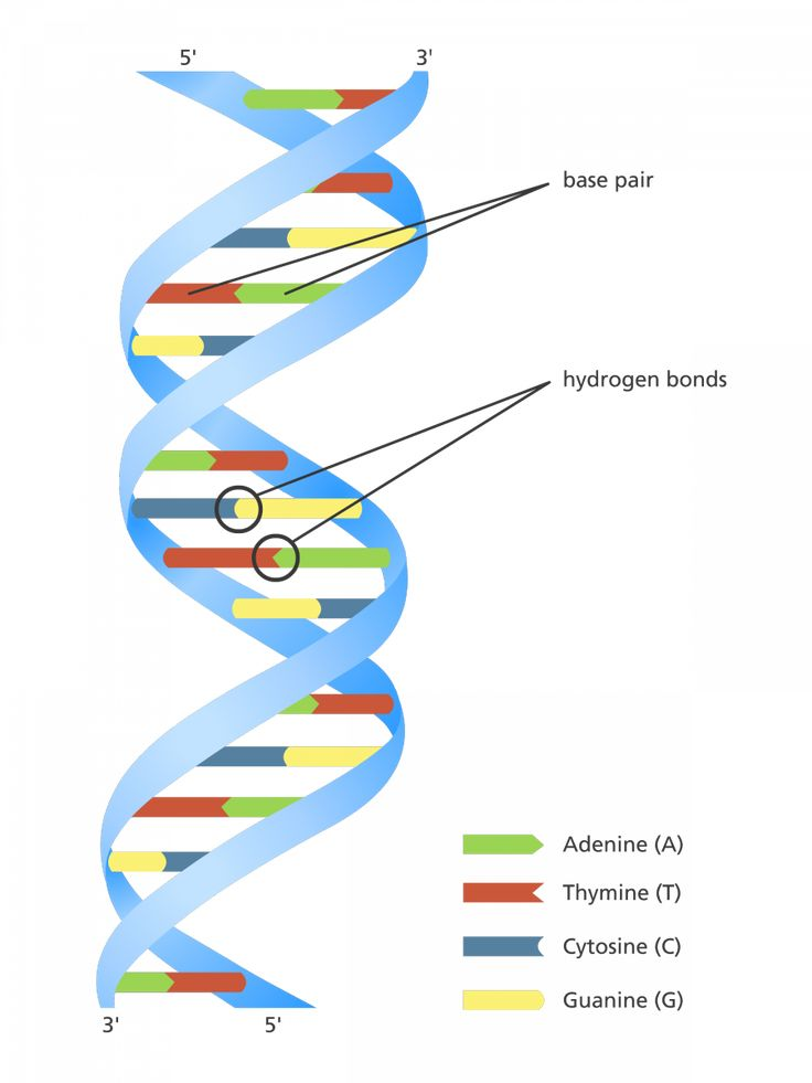 Dna Double Helix Diagram Dna Diagram Images Gallery How To Guide