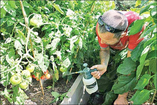 Les bienfaits de la levure chimique sur vos plantes et les fleurs de votre jardin !