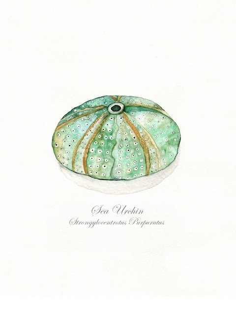 115 best images about Watercolor Fish,Turtles,Lizards on Pinterest   Watercolor print, Conch