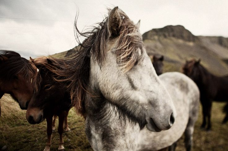 i want to go to iceland. photo by brooke fitts.