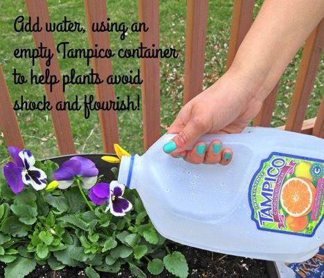 With Tampico Juice and a little bit of spring gardening, you can Love Your Colorful World! Whether you are celebrating Earth Day on April 22nd or National Gardening Month, it's time to get outside and enjoy the beautiful colors of nature.