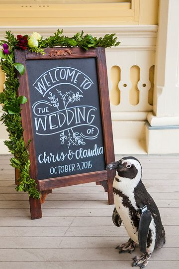 Winnie welcomes guests! Photo from Claudia & Chris : Maryland Zoo collection by Maria Linz Photography