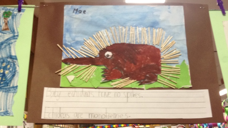 Echidna craft and writing
