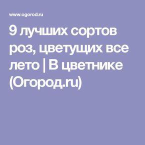 9 лучших сортов роз, цветущих все лето   В цветнике (Огород.ru)