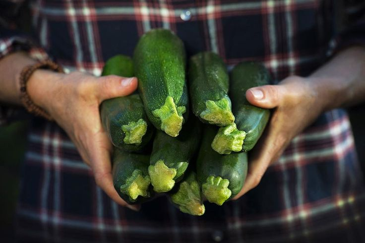 MAY 2016 – Fresh organic zuchini is in season and there is plenty of it. Check out these beauties from United Organics – fresh from the farmer to your local Organic grocer.