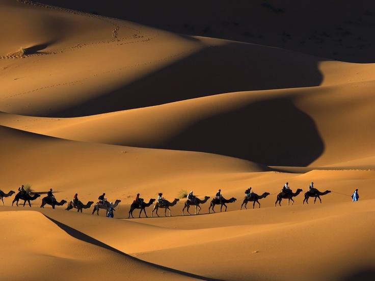 Google Image Result for http://coolwallpaperbackgrounds.com/user-content/uploads/wall/o/73/Dromedary_Camel_Train,_Sahara_Desert,_Morocco.jpg