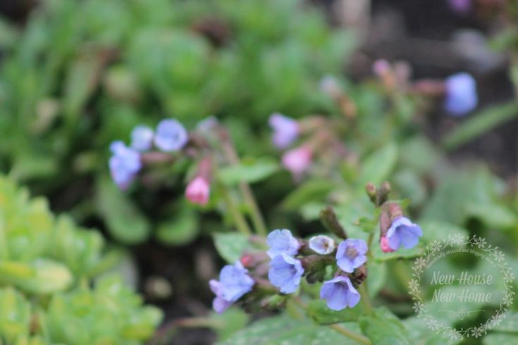 5 Favorite Spring Perennials