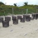 Liberando Tortugas en la Playa de Xel-Ha