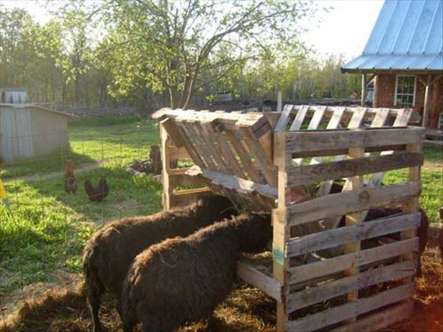 "ha!  if i had livestock!  maybe i can make geronimo a ""feeding bin"" so he doesn't dump his bowl all over the yard!"