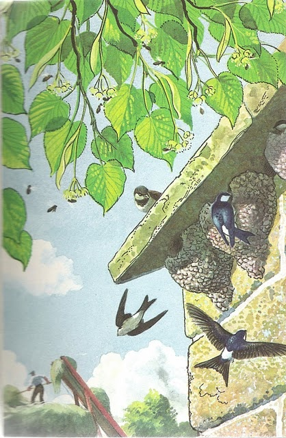 Charles Tunnicliffe for Ladybird books - swallows