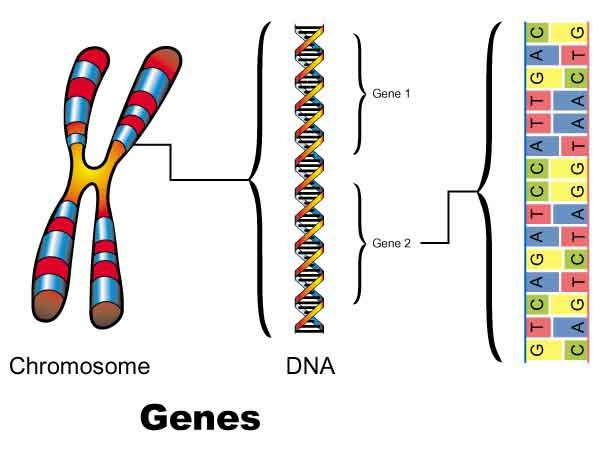 gene dna and chromosome relationship problems