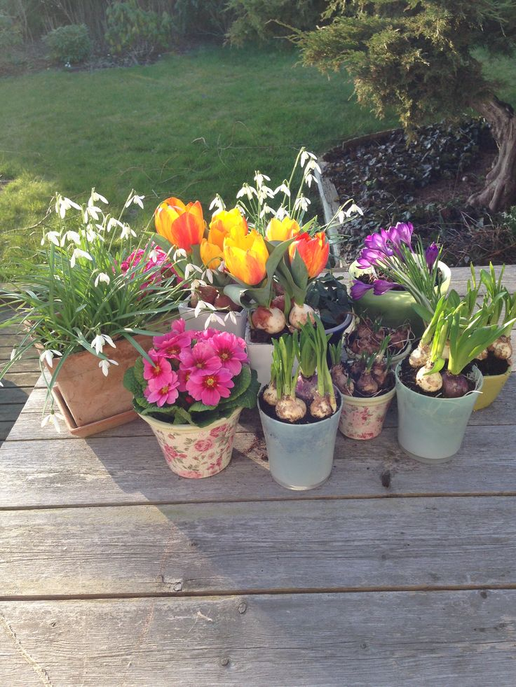 Winter and Spring flowers