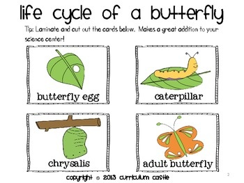 Life Cycle Sequencing Cards - Butterfly and Frog! - Curriculum Castle - TeachersPayTeachers.com