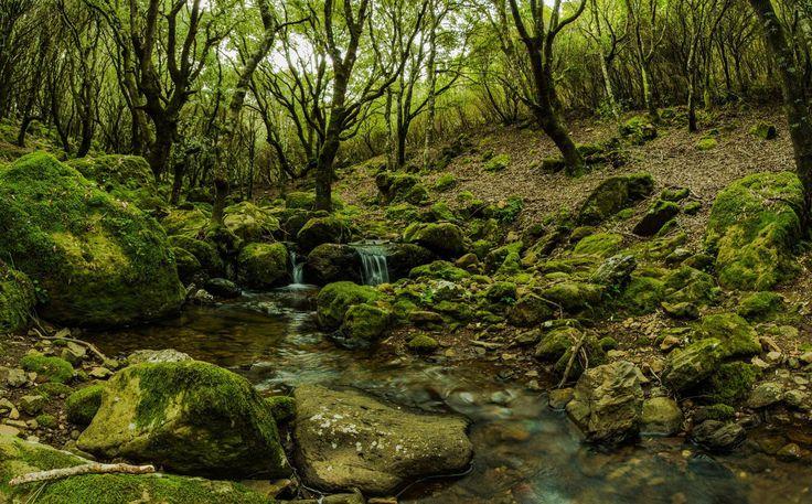 Sardegna-Is Benas - loc Monte Arci - Morgorgiori - scatto di Giovanni Bbig Orrù