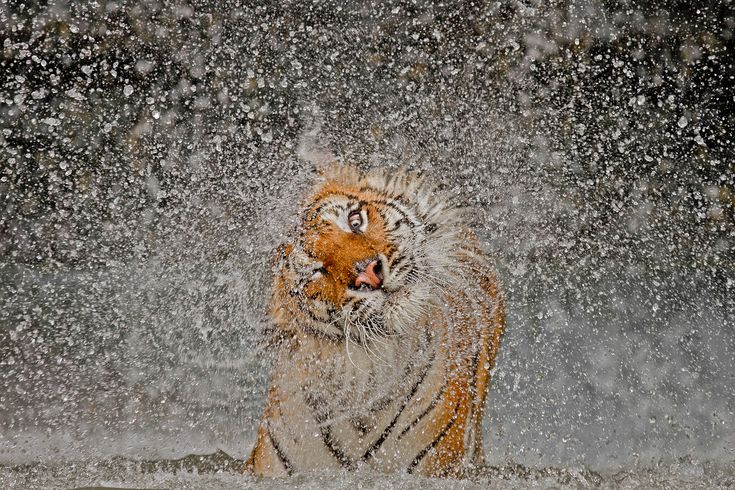 This photo won the 2012 National Geographic Photo Contest.