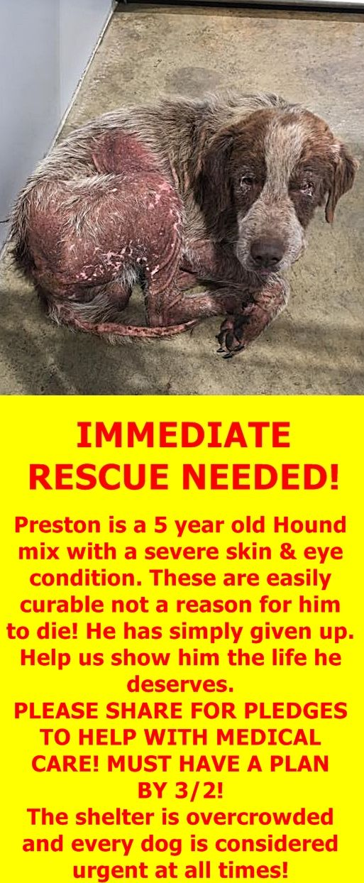 RESCUED --- MOBILE COUNTY ANIMAL SHELTER 7665 Howells Ferry Rd. Mobile, Alabama 36618  https://www.facebook.com/mobilebaldwincountyurgents/photos/pcb.1289578214428794/1289576034429012/?type=3&theater
